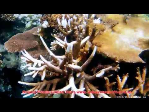 Great Barrier Reef with Sydney Private Guided Tours