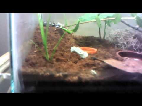 Mediterranean Gecko Habitat