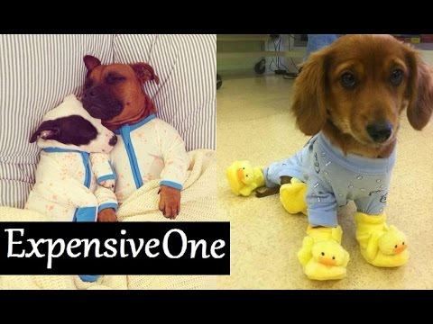 These doggies in onesies are the cutest dogs ever!