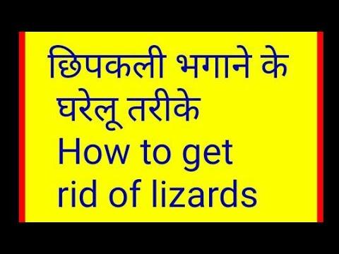 छिपकली भगाने के घरेलू तरीके । Best home Remedies to Get Rid of Lizard from House ।Rubis Recipes
