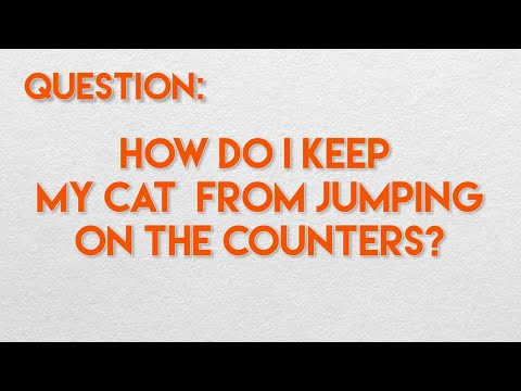 How Do I Keep My Cat From Jumping on the Counters?