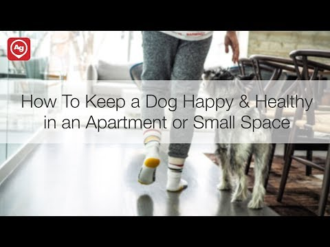 How to Keep a Dog Happy & Healthy in an Apartment or Smaller Space