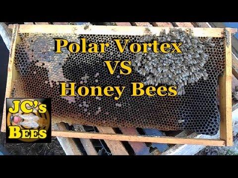 Polar Vortex Kills Honeybees