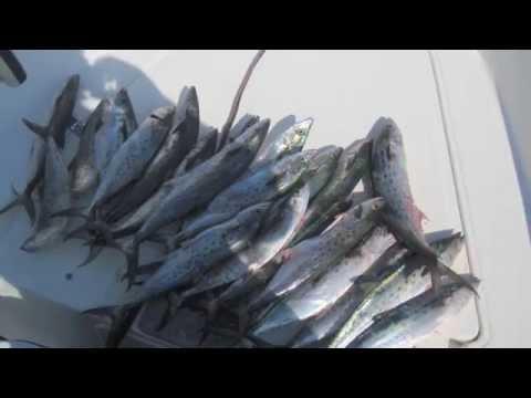 spanish mackerel fishing august 2011