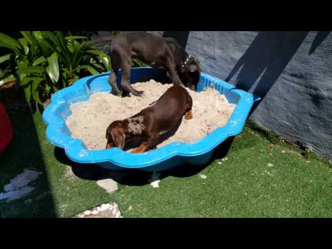 Harmless & easy way to stop dogs digging up your Garden