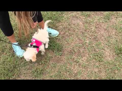 Puppy goes potty