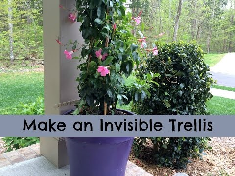 Make an Invisible Trellis for a Climbing Plant