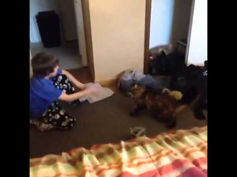 Kid gets mauled by cat (vine)