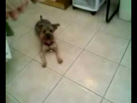 Zoa gets a treat - Take 2
