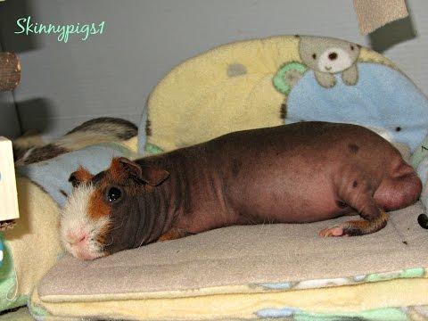 Little Foot: Sleepy Skinny Pig