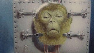 Surgeon Performs Successful Head Transplant On A Monkey