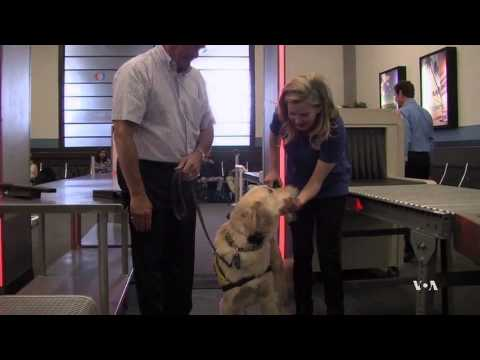 K9 Flight School Trains Dogs for Air Travel