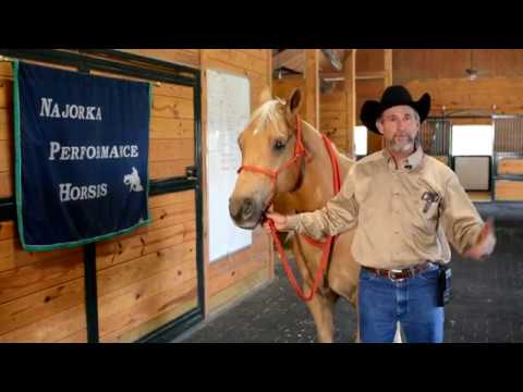 Horse Rope Halter How To