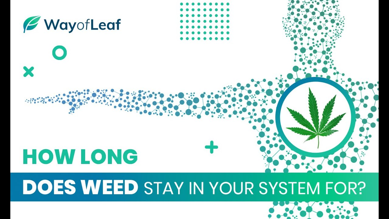 How Long Does Weed Stay in Your System For (Full Guide)