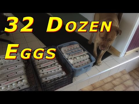 Food Bank Donation 384 Duck Eggs #61 1,000+ Ducks 2017