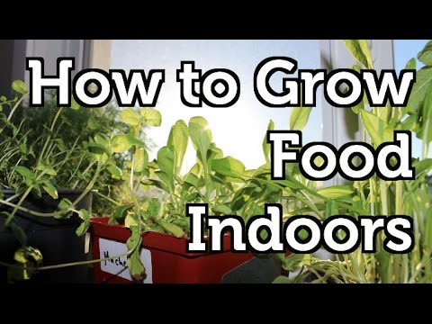 Setting up a Basic Indoor Grow Room