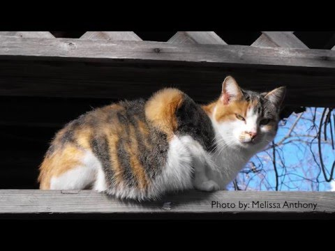 How to Get Rid of Stray Cats - DIY Pest Control