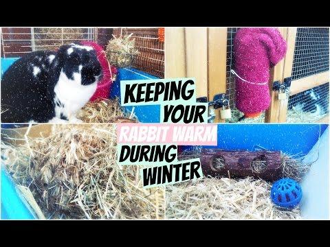 Keeping Your Rabbit Warm During Winter | RosieBunneh