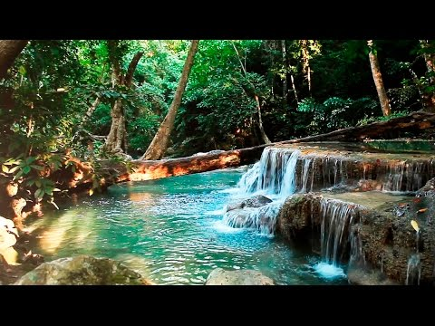 Rainforest Sounds - Water Sound Nature Meditation