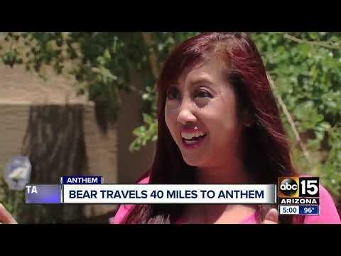 Bear put down after wandering from Prescott to Anthem neighborhood