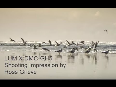 Panasonic LUMIX DC-GH5 Shooting Impression by Ross Grieve