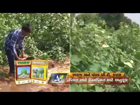 Agriculture Fertilizer and Seeds Manufacturer