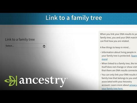 How Do I Link My AncestryDNA Results to My Ancestry Tree? | Ancestry Academy
