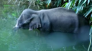 مفرقعات في الفاكهة تودي بأنثى فيل حامل في الهند   AFP