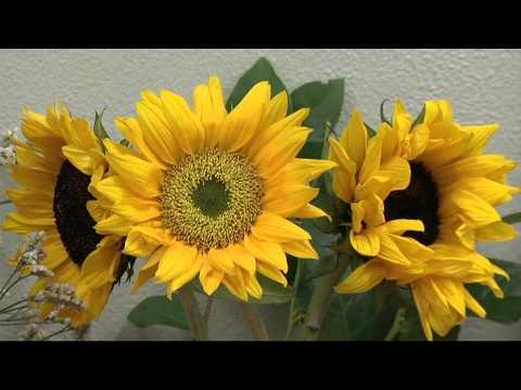 BTA Language of Flowers