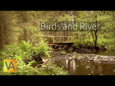Nature Sounds: Forest Birds Singing Chirping at Peaceful Water Stream (HD)