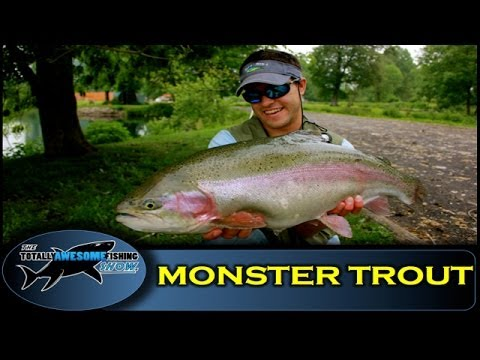 MONSTER TROUT on a 4 weight Fly Rod (4wt) - The Totally Awesome Fishing Show