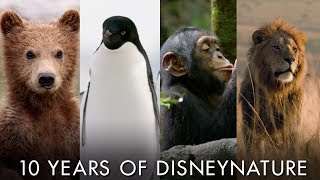 Celebrating 10 Years of Disneynature