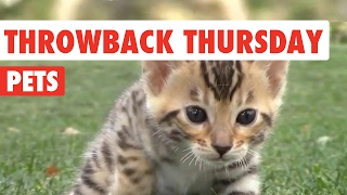 Throwback Thursday Pets Video Compilation 2017