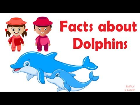 Interesting dolphin facts for kids - information about dolphins - facts about dolphins