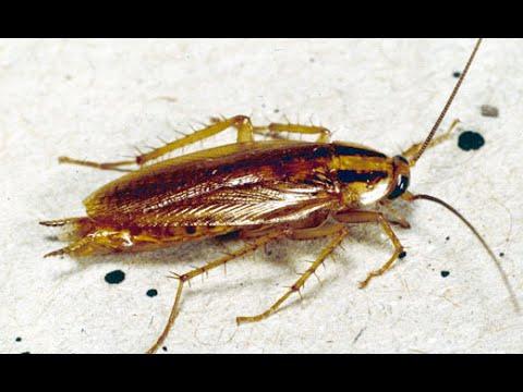 roaches in kitchen