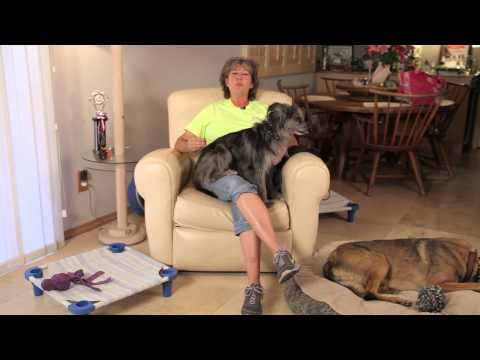 How to Stop a Dog From Charging to the Front Door : Dog Training & Care
