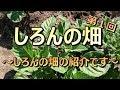 初!しろんの畑☆ついに動画に☆第1回!