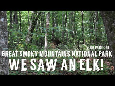 Great Smoky Mountains National Park Part One | Wandering Around In Wonder