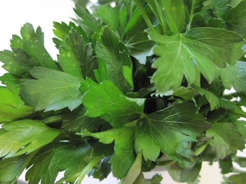Two (2) TIPS: On storing FRESH PARSLEY - How to store PARSLEY
