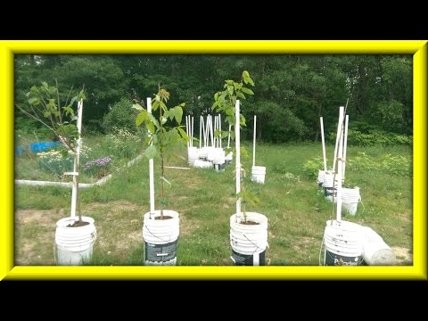 Nut Tree & Blackberry Bush Unboxing (Sorta, Kinda?)