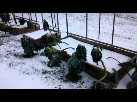 Winter Garden Harvest + Greenhouse Screen Door Cat Adventures container
