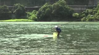 Ayu Fishing 天竜川の鮎