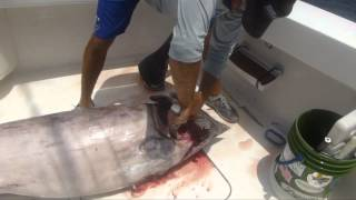 How To Prepare A Swordfish With The Booby Trap Fishing Team