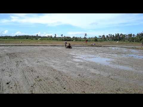 Preparing  the land to plan rice