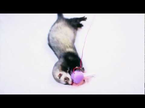 Marshall Pet Products - Ferret Teaser Toy