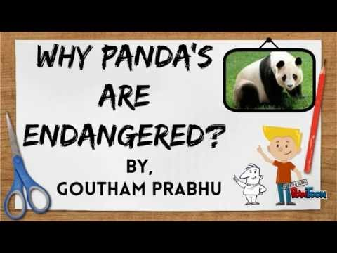Why are Panda's Endangered?? BY GOUTHAM PRABHU