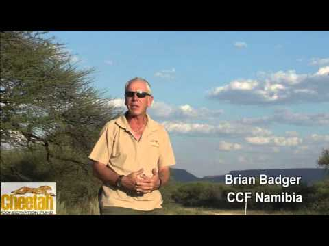 Dogs Helping Farmers ... Saving Cheetahs