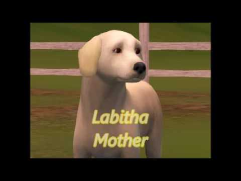 Sims 3 Dog Breeding With Adoptable Puppies!