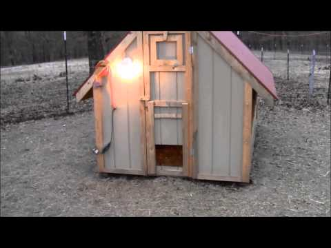 Leave the Light On - Chickens In Winter