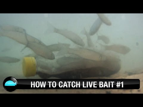 How To: Catch Live Bait   We Flick Fishing Videos